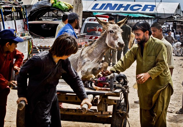 People carry a donkey injured in an explosion at the Jalozai camp outside Peshawar, Pakistan, on March 21, 2013. A car packed with explosives went off in a refugee camp killing and wounding dozens of people. (Photo by Mohammad Sajjad/Associated Press)