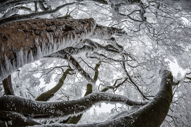"Trees covered in snow on the summit plateau of the ""Grosser Feldberg"" mountain in the Taunus area, Hesse, Germany, 03 December 2014. (Photo by Frank Rumpenhorst/EPA)"