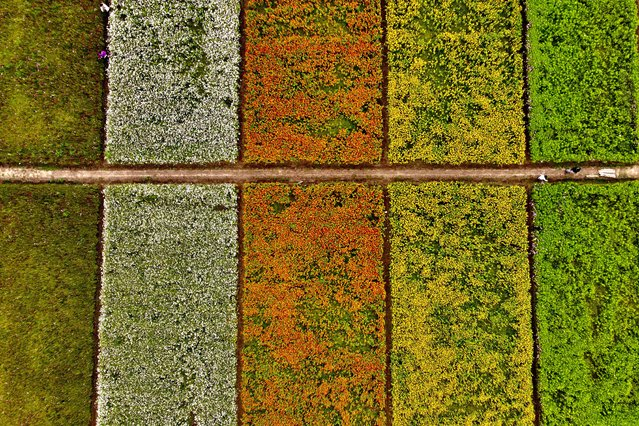 This aerial view shows tourists walking amongst fields of flowers during the Taoyuan Flower Festival in Taoyuan, Taiwan on November 3, 2020. (Photo by Sam Yeh/AFP Photo)