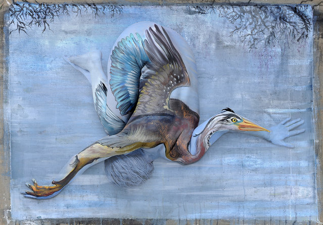Blue Heron. (Photo by Ryder Gledhill/Shannon Holt/Caters News)