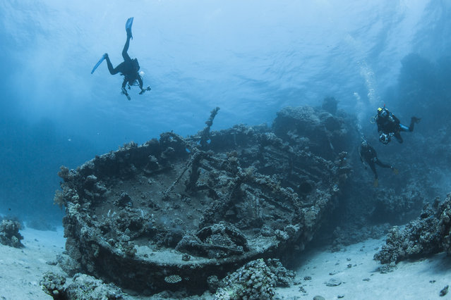 Divers swim next to an old wreck at the Red sea on the north of the Ras Banas peninsula in Egypt, December 1, 2015. (Photo by Sergey Dolzhenko/EPA)
