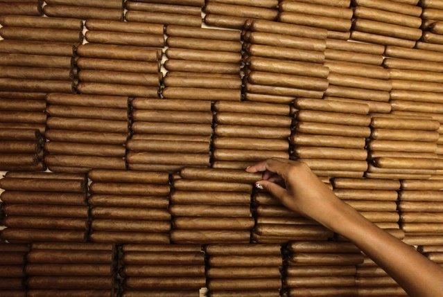 "A woman sorts cigars at the Cohiba cigar factory ""El Laguito"" in Havana September 10, 2012. (Photo by Desmond Boylan/Reuters)"