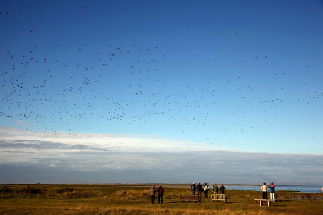 Birdwatchers gather as waders flock together seeking new feeding grounds during the incoming tide at the RSPB's Snettisham Nature reserve. (Photo by Dan Kitwood/Getty Images via The Palm Beach Post)