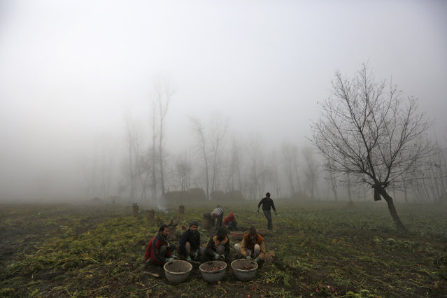 Kashmiri farmers work in a farmland amid dense fog on a cold winter morning in Srinagar, India January 13, 2016. (Photo by Danish Ismail/Reuters)