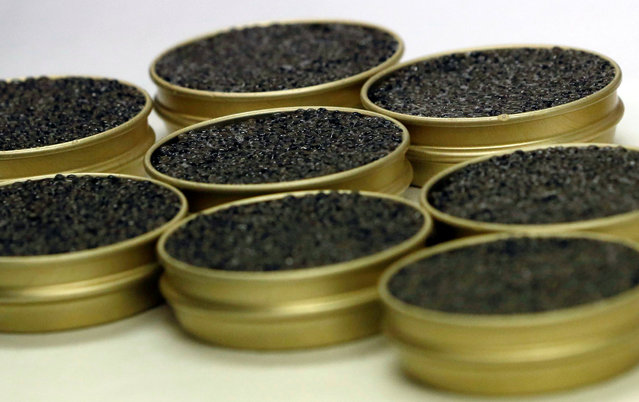"""Tin cans of caviar are seen at the caviar fish farming company """"Sturgeon"""", the leading French producer, in Saint-Genis-de-Saintonge, France, November 8, 2016. (Photo by Regis Duvignau/Reuters)"""