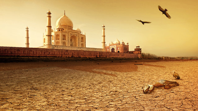 Taj Mahal, India, after severe drought. (Photo by Joel Krebs/Caters News)