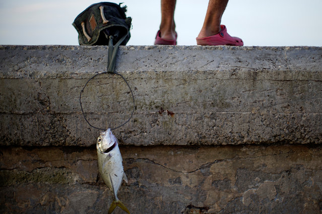 A fish hangs on a wire at the seafront in Havana, Cuba November 5, 2018. Picture taken November 5, 2018. (Photo by Alexandre Meneghini/Reuters)