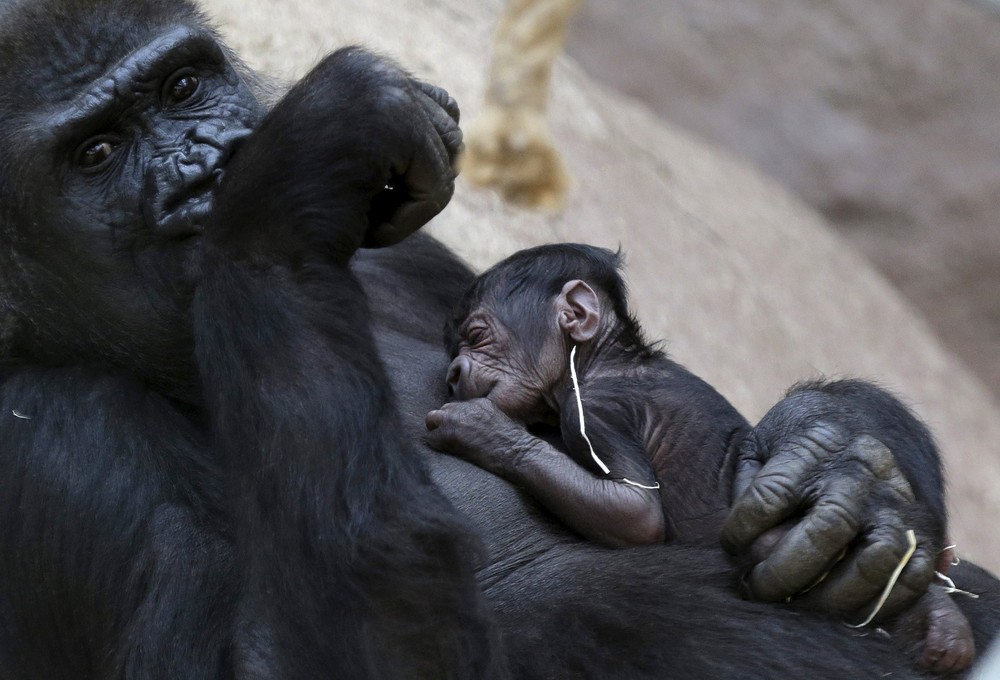 Czech Zoos Welcomes the Adorable Babys