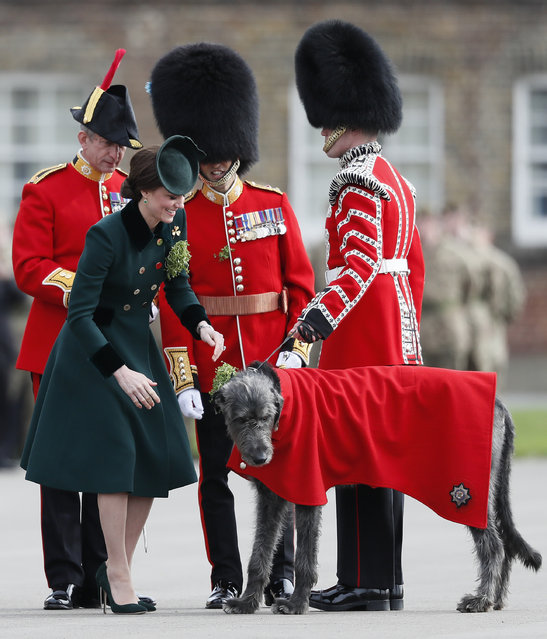 Britain's Kate, The Duchess of Cambridge, smiles after she presenting a shamrock to Domnhall the Irish Wolfhound Mascot, at the St. Patrick's Day Parade at the Cavalry Barracks in Hounslow, London, Friday, March 17, 2017. Their Royal Highnesses visited to present shamrocks to the Officers and Guardsmen of the 1st Battalion Irish Guards. (Photo by Kirsty Wigglesworth/AP Photo)