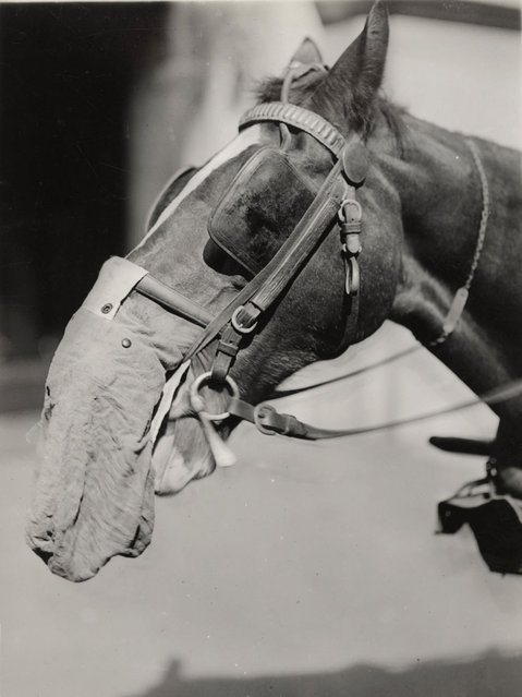 A horse wears a flannelette gas mask at the Chemical Development Laboratory, Philadelphia, in this 1919 handout picture. This picture is part of a previously unpublished set of World War One (WWI) images from a private collection. The pictures offer an unusual view of varied and contrasting aspects of the conflict, from high tech artillery to mobile pigeon lofts, and from officers partying in their headquarters to the grim reality of life and death in the trenches. The year 2014 marks the centenary of the start of the war. (Photo by Reuters/Archive of Modern Conflict London)