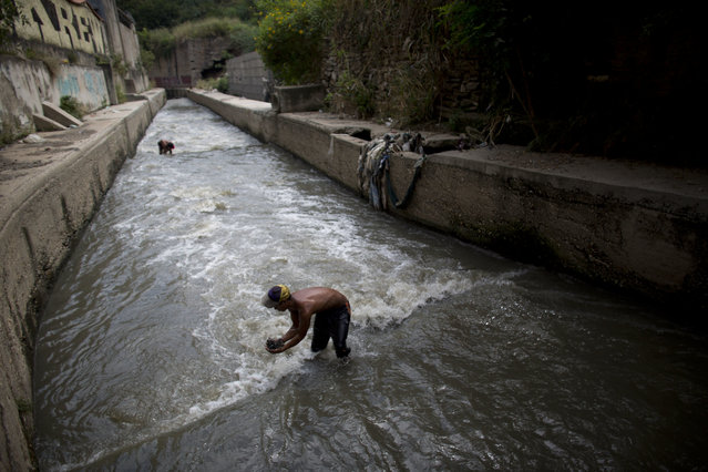 In this November 30, 2017 photo, Douglas scoops up mud from the bottom of the polluted Guaire River, in search of gold and anything valuable he can sell, in Caracas, Venezuela. Some stretches of the river smell of sewer while others emit a toxic odor of fuel, a stench that stays in ones nose for hours after leaving the water. (Photo by Ariana Cubillos/AP Photo)