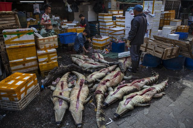Crocodiles stands on display for buyers on Huangsha Seafood Market in Guangzhou, Guandong Province, China, 18 January 2018. (Photo by Aleksandar Plavevski/EPA/EFE)