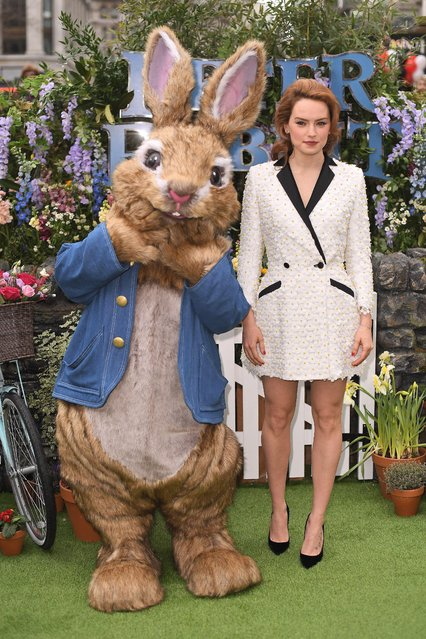 """""""Star Wars"""" legend Daisy Ridley attends the UK Gala Screening of """"Peter Rabbit"""" at Vue West End on March 11, 2018 in London, England. (Photo by James Gourley/Rex Features/Shutterstock)"""