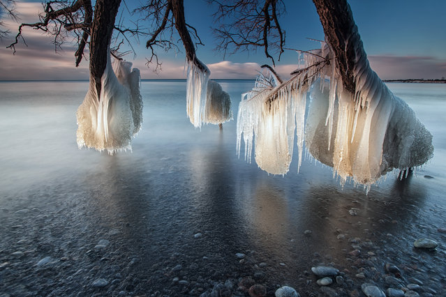 """Tree of Ice"". Taken on the shores of Lake Ontario,  Whitby, Canada . A fallen tree stretches out into the lake and as a combination of ice cold water and freezing temperatures hit the tree its freezes on contact and in time creates some beautiful ice structures. (Photo and caption by Charles Corbin/National Geographic Traveler Photo Contest)"