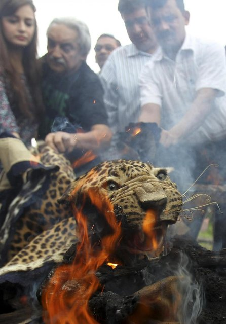 Indian Bollywood film actress Dia Mirza (L) looks on as forest officials and activists burn a leopard skin during an official burning of wildlife contraband, including tiger and leopard skins and bones, in Mumbai on July 30, 2013. The tiger Indias national animal is disappearing from the country because of rampant poaching and widespread habitat destruction. There are an estimated 1,800 wild tigers in India today, down from approximately 100,000 in 1900. (Photo by Rafiq Maqbool/AP Photo)