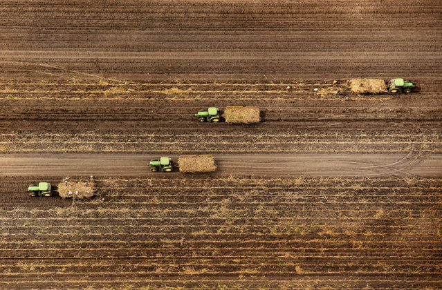 Florida fields. (Photo by Jassen Todorov/Caters News)