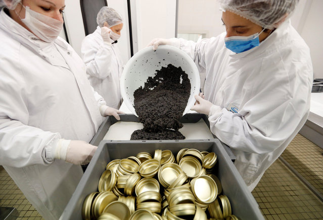 """Employees prepare clean and processed caviar to be packed in tins at the caviar fish farming company """"Sturgeon"""", the leading French producer, in Saint-Genis-de-Saintonge, France, November 8, 2016. (Photo by Regis Duvignau/Reuters)"""