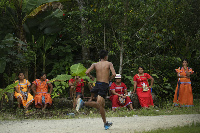 In this November 26, 2018 photo, a man runs in the 10 K competition as Ngabe-Bugle women look on during the second edition of the Panamanian indigenous games in Piriati, Panama. The winner of the race will participate in the World Indigenous Games where over 30 countries and more than 2000 athletes participate. (Photo by Arnulfo Franco/AP Photo)