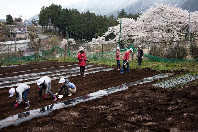 Six of Aone elementary school students at the potato field on April 9, 2015. (Photo by Ko Sasaki/The Washington Post)