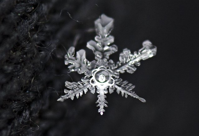 An intricate snowflake melts quickly on a black glove after a fresh snowfall in Knoxville on Tuesday, January 28, 2014. (Photo by Adam Lau/News Sentinel)