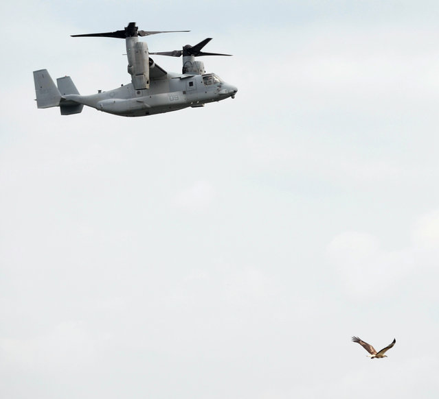 An eagle (R) flies past as the Marine Corps' MV-22B Osprey, the world's first production tilt-rotor aircraft, performs aerial display during the Singapore Airshow on February 12, 2014. Airbus' flagship A380 got a fresh lift February 12 after leasing firm Amedeo firmed up its order for 20 of the superjumbo aircraft in a deal worth $8.3 billion. (Photo by Roslan Rahman/AFP Photo)
