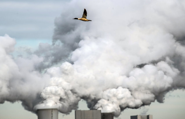 A goose flies over the lignite-fired power station Boxberg of the energy company LEAG in Boxberg, Germany, 28 January 2019. Germany's Structural Coal Commission (Kohlekommission) appointed by Chancellor Merkel recommends the country should quit coal latest by 2038 in order to meet its emissions targets. The proposal, which was released on 26 January 2019, is subject to amendment by government and parliament, media reported. (Photo by Filip Singer/EPA/EFE)