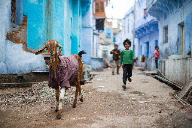 """I want to be a model"". It was in Rajasthan, in Bundi. I was exploring the small streets and I tried to find some nice spot for some street shoot, and exactly then I saw this goat and the children, who tried to run to me to be on the picture, but the goat did a better job! Photo location: Bundi, Rajasthan, India. (Photo and caption by Stefan Meyer/National Geographic Photo Contest)"