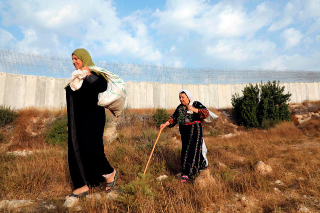 Palestinian women walk along Israel's controversial separation barrier from the Palestinian side near the West Bank village of Dura on October 30, 2019, on their way to cross the barrier in order to harvest olives from their lands that currently lie across. Early every morning in the occupied West Bank a group of Palestinians wait for Israeli soldiers allow them to harvest their olives, which lie across the barrier which Israel started constructing in 2002 during the second Palestinian Intifada (uprising), indicating that it wants to protect itself from attacks from the occupied West Bank. (Photo by Hazem Bader/AFP Photo)