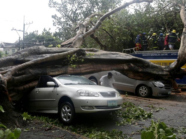 Firemen remove the branches from a fallen tree which fell on two cars at the onslaught of Typhoon Rammasun (locally known as Glenda) which battered Makati city, east of Manila, Philippines Wednesday, July 16, 2014. (Photo by Bullit Marquez/AP Photo)