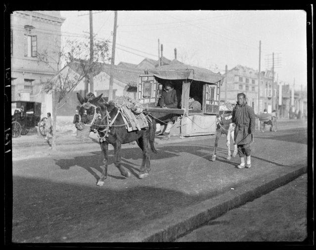 Mule Litter. China, Beijing, 1917-1919. (Photo by Sidney David Gamble)