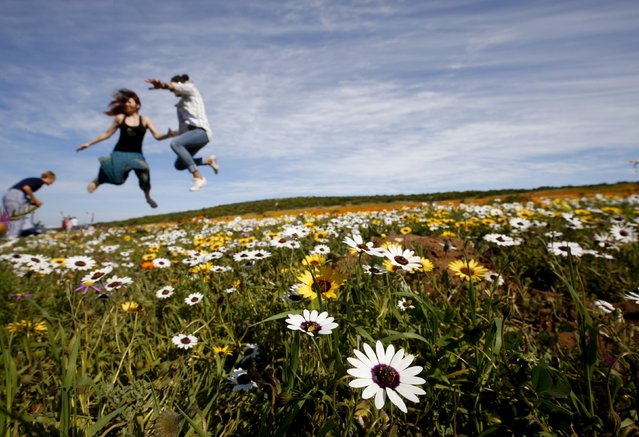 Visitors jump as a friend takes their picture amongst wild flowers in the Postberg section of South Africa's West Coast National Park, September 6, 2015. Each year visitors arrive in droves to witness  carpets of flowers blooming across a normally arid region, heralding the coming southern hemisphere spring. (Photo by Mike Hutchings/Reuters)