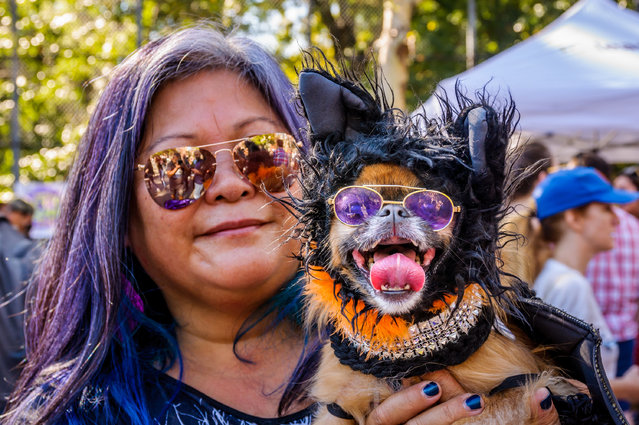 The 27th Annual Tompkins Square Halloween Dog Parade was held on October 21, 2017. (Photo by Erik McGregor/Pacific Press/LightRocket via Getty Images)