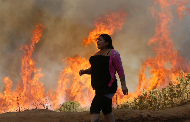 A resident looks at a wildfire in Vina del Mar, Chile, March 12, 2017. (Photo by Rodrigo Garrido/Reuters)