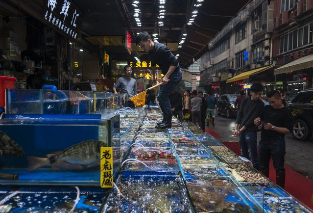 A man collects seafood from tanks for buyers on Huangsha Seafood Market in Guangzhou, Guandong Province, China, 16 January 2018. (Photo by Aleksandar Plavevski/EPA/EFE)
