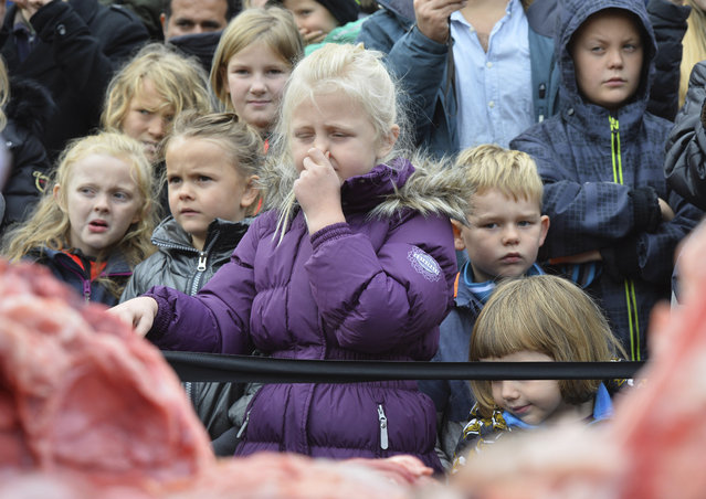 Children reacts to the dissection of a dead male lion in Odense Zoo, Denmark, Thursday, October 15, 2015. (Photo by Ole Frederiksen/Polfoto via AP Photo)