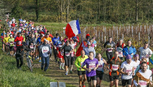Competitors, one with a French flag, run past vineyards during the Marathon International du Beaujolais race in Corcelles, November 22, 2014. (Photo by Robert Pratta/Reuters)