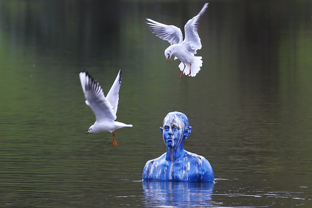 "Seagulls fly around the art-work ""Where the Tides Ebb and Flow"" by Argentinian artist Pedro Marzorati installed in a pond at the Montsouris park during the COP21, United Nations Climate Change Conference, in Paris, Wednesday, December 2, 2015. (Photo by Francois Mori/AP Photo)"