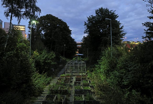 A general view of Tragard pa Sparet (Garden on the track) is pictured in Stockholm, Sweden, September 15, 2016. They are doing it on the rooftops, on tower block balconies and even on a disused railway: Swedes have discovered a passion for urban gardening as a way of growing fresh food and getting back in touch with nature. Part of a global movement, an increasing number of Swedish city-dwellers are growing their own in window boxes and allotments or are visiting public gardens built in or on industrial or office spaces. (Photo by Maxim Shemetov/Reuters)
