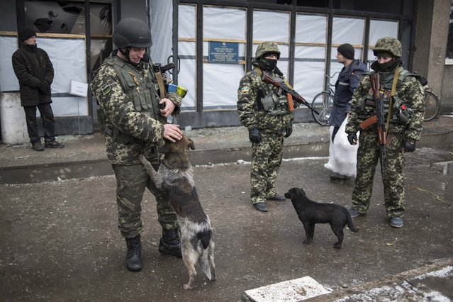 Members of the Ukrainian armed forces gather along a street, with dogs seen nearby, in Debaltseve, February 4, 2015. (Photo by Sergey Polezhaka/Reuters)