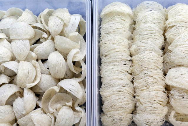 Two styles of cleaned bird's nest, Yan Zhan (L) and Su Zhan (R) await repacking at a processing plant in Kuala Lumpur, February 17, 2015. Prized in China for is alleged health benefits for hundreds of years, nests made from swiftlets' saliva are being mixed into coffee and cereal as the Southeast Asian producers of the delicacy seek to broaden its appeal, and their profit margins. (Photo by Olivia Harris/Reuters)