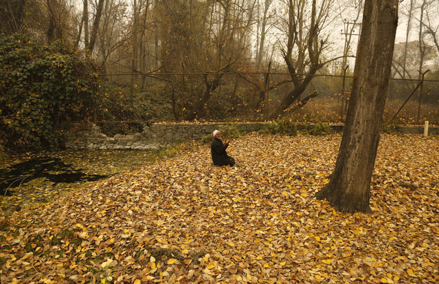 An elderly Kashmiri Muslim man prays seated on dried leaves on a cold and foggy day in Srinagar, Indian controlled Kashmir, Wednesday, November 30, 2016. Parts of Indian-controlled Kashmir region is experiencing cold and foggy conditions after fresh snowfall in the Himalayan mountain ranges in the past few days. (Photo by Mukhtar Khan/AP Photo)