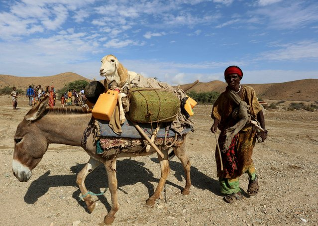 A woman transports her belongings and a sheep on a donkey near Jidhi town of Awdal region, Somaliland April 10, 2016. (Photo by Feisal Omar/Reuters)