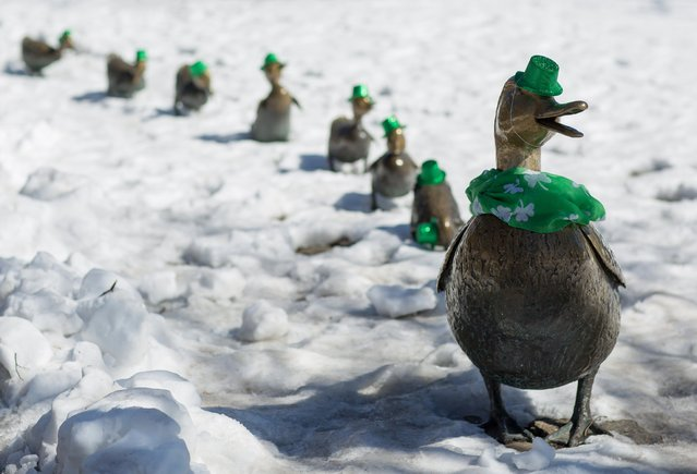 "The statues of the ducks from the book, ""Make Way For Ducklings"", (R-L) Mrs. Mallard, Jack, Kack, Lack, Mack, Nack, Ouack, Pack, and Quack are decorated for State Patrick's Day in the Boston Public Gardens in Boston, Massachusetts, USA 17 March 2017. (Photo by C.J. Gunther/EPA)"