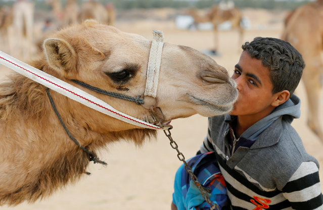 Ayman, an 11-year-old jockey, kisses his camel near the starting line during the opening of the International Camel Racing festival at the Sarabium desert in Ismailia, Egypt, March 21, 2017. (Photo by Amr Abdallah Dalsh/Reuters)