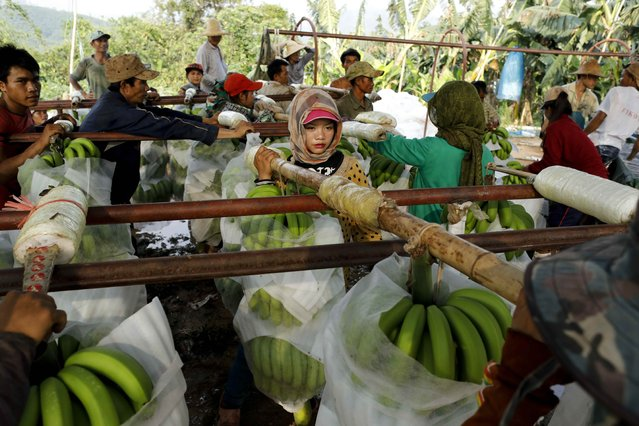 A woman waits to deliver her harvest at a packing line at a banana plantation operated by a Chinese company in the province of Bokeo in Laos April 25, 2017. (Photo by Jorge Silva/Reuters)