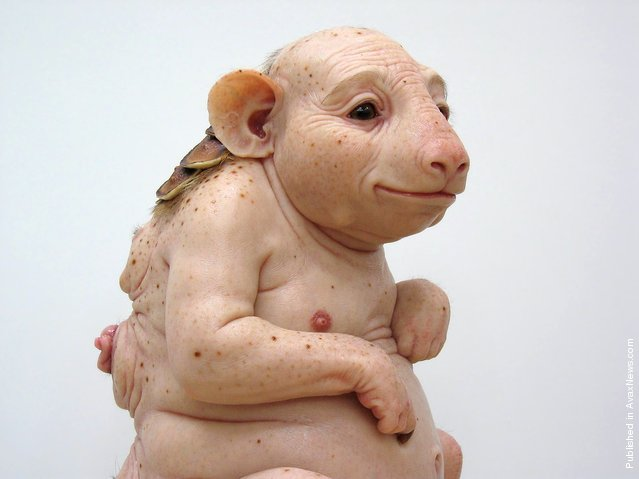 Surrogate (for the Northern Hairynosed Wombat) by Patricia Piccinini