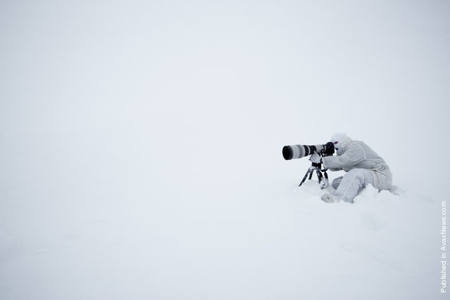 Paul Nickle photographing polar bears in Svalbard