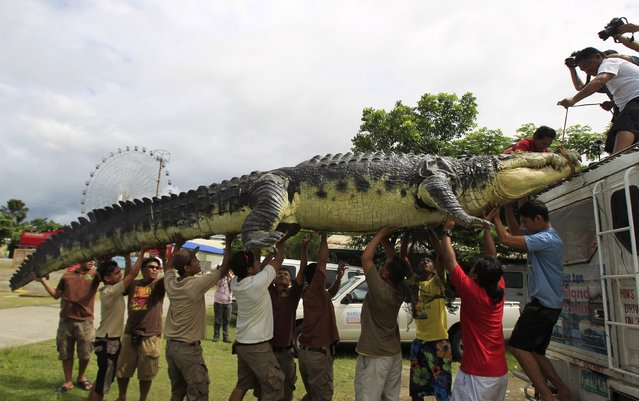 """Workers carefully unload 21-foot crocodile robot """"Longlong"""" from the roof of a van, after it reaches Crocodile Park in Pasay city, metro Manila July 5, 2014. The robot, inspired by Lolong, the largest saltwater crocodile to have been in captivity, contains thousands of mechanisms costing around 80,000 pesos ($1,818) and took three months to build by robot experts. (Photo by Romeo Ranoco/Reuters)"""