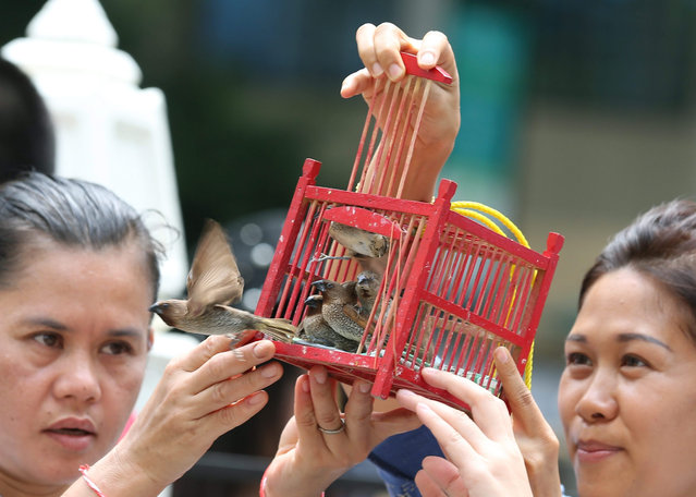 Thai women worshiper release birds from a cage at the Erawan Shrine in Bangkok, Thailand, 03 September 2015. The restored statue of Lord Brahma, the Hindu God of creation, after craftsmen from the Thai Fine Arts Department finished their repairs on the statue which was damaged by a bomb attack on 17 August, as the Erawan Shrine reopens for visitors on 03 September. The bomb attack killed at least 20 people and injured 123, including foreign tourists. (Photo by Narong Sangnak/EPA)
