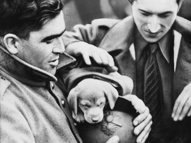 A bewildered, sleepy pup was adopted by these friendly Poilus when the French army moved into position somewhere along the western front in France on October 10, 1939. (Photo by AP Photo)